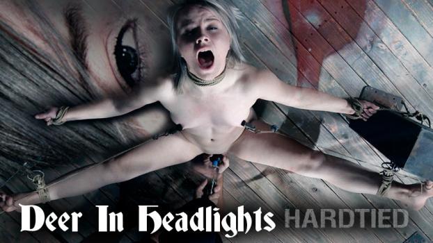 hardtied-17-10-11-bambi-belle-deer-in-headlights.jpg
